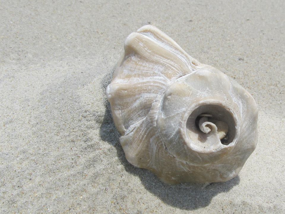 CU shell