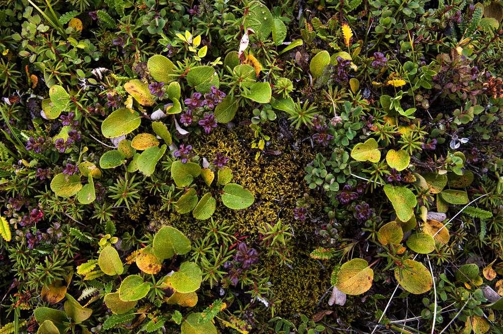 ECU tundra plants copy 3.jpg