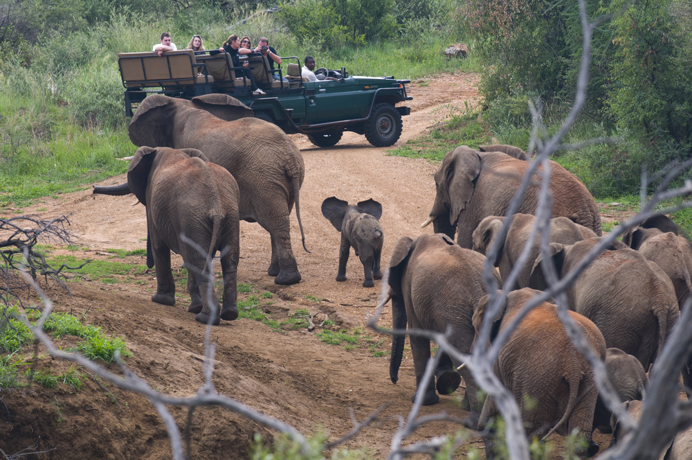 Elephants on the drift