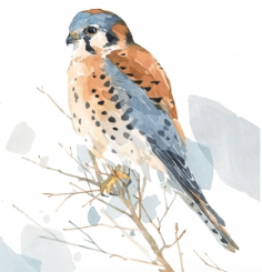 David Scheirer Watercolors