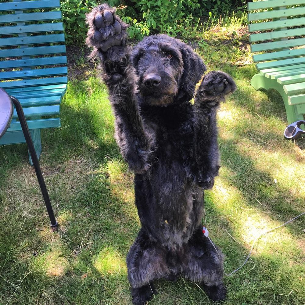 High-five fra Alvin for en aktiv livsstil