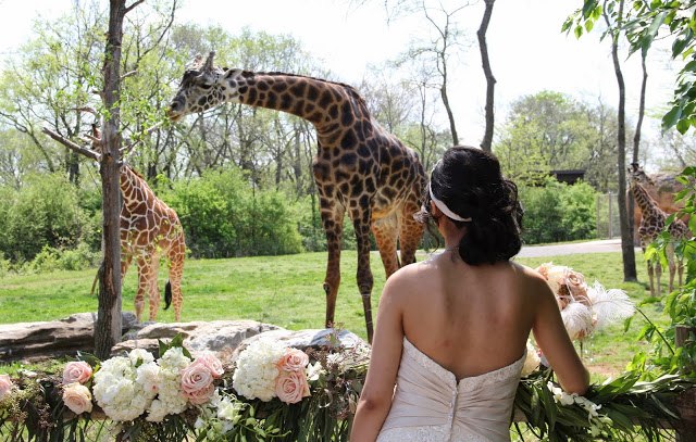bride and animals.jpg