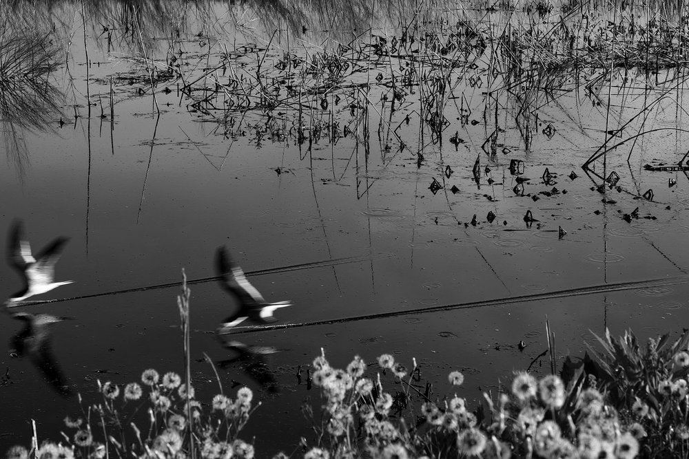oysterbirds.jpg