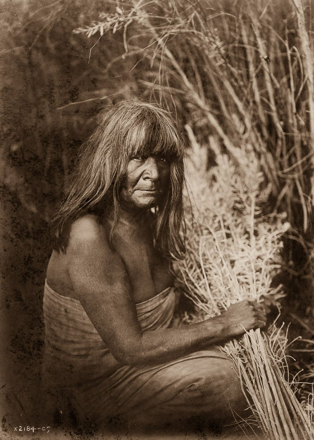A Maricopa woman with arrow-brush stalks,  1907.  ©EDWARD S. CURTIS/LIBRARY OF CONGRESS