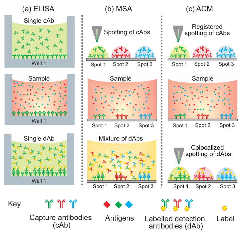 Schematic process flow for three sandwich assay formats, namely the ELISA (a singleplex assay), multiplexed sandwich assays (MSA) in microarray format, and the antibody colocalization microarray (ACM).