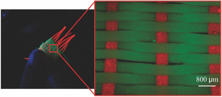 54. A. Tamayol, A. H. Najafabadi, B. Aliakbarian, E. Arab-Tehrany, M. Akbari, N. Annabi, D. Juncker, and A. Khademhosseini,  Hydrogel Templates for Rapid Manufacturing of Bioactive Fibers and 3D Constructs  , Advanced Healthcare Materials,4, 2146-2153 (2015).  PDF  |  SI     Featured on the inside front cover of Advanced Healthcare Materials volume 4, issue 14.