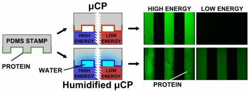 45.  S. G. Ricoult, A. Sanati Nezhad, M. Knapp-Mohammady, T. E. Kennedy, and D. Juncker,   Humidified Microcontact Printing of Proteins: Universal Patterning of Proteins on Both Low and High Energy Surfaces,   Langmuir, 30, 12002–12010 (2014) .  PDF  |  SI