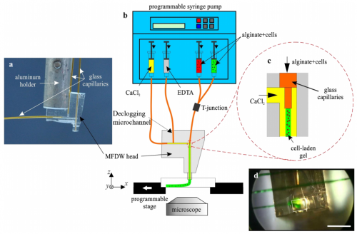 41.  S. Ghorbanian, M. A. Qasaimeh, M. Akbari, A. Tamayol, and D. Juncker,  Microfluidic Direct Writer with Integrated Declogging Mechanism for Fabricating Cell-Laden Hydrogel Constructs  ,Biomedical Microdevices,16, 387-395 (2014).  PDF  |  SI