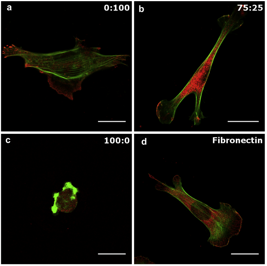 39.  Ricoult S.G., Thompson-Steckel G., Correia J.P., Kennedy T.E., and Juncker D.,T  uning Cell-Surface Affinity to Direct Cell Specific Responses to Patterned Proteins  ,Biomaterials,35, 727–736 (2014).   PDF  |  SI       Highlighted in   Lab on a Chip  ,  14 , 1226 (2014)