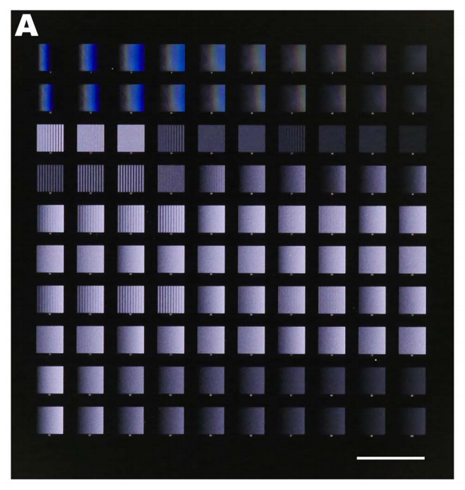44.  G. Ongo, S. G. Ricoult, T. E. Kennedy, and D. Juncker,  Ordered, Random, Monotonic, and Non-Monotonic Digital Nanodot Gradients  ,PLOS ONE,9, e106541 (2014).  PDF  |  SI