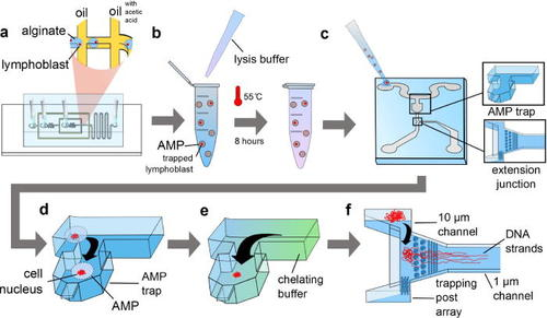 71.  P. Zimny, D. Juncker, W. Reisner,   Hydrogel droplet single-cell processing: DNA purification, handling, release, and on-chip linearization  , Biomicrofluidics, 12, 024107 (2018).    PDF      Featured on Biomicrofluidics on March 1, 2018