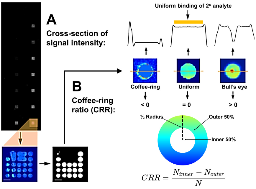 75.  K.F.A. Clancy, S. Dery, V. Laforte, P. Shetty, D. Juncker, D.V. Nicolau,   Protein microarray spots are modulated by patterning method, surface chemistry and processing conditions ,  Biosensors and Bioelectronics (2018).    PDF    |    SI