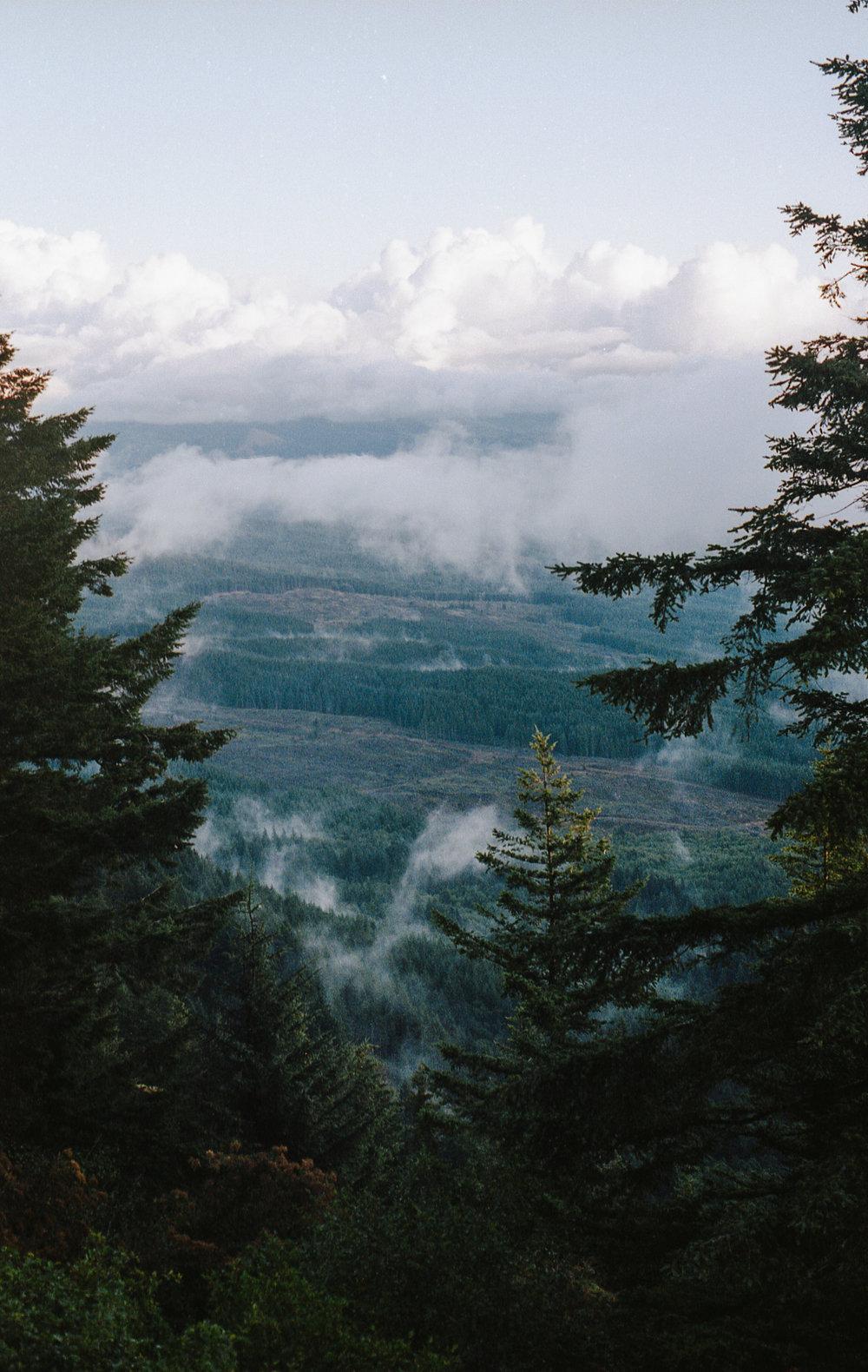 Sea Of Pine
