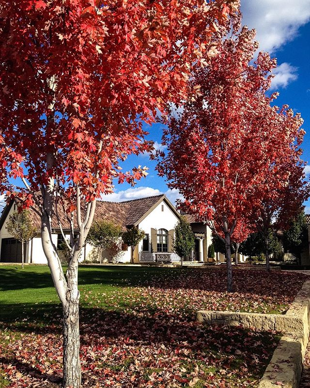 More beautiful fall colors 📷 🍂 #residentialdesign #denverdesign