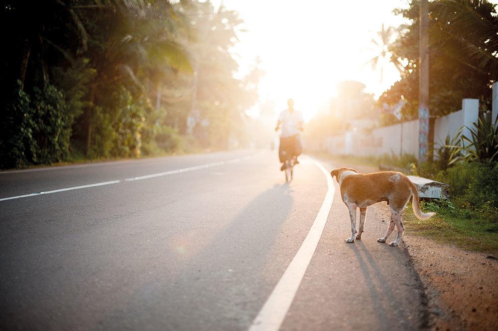 Dog waiting at road in Sri Lanka