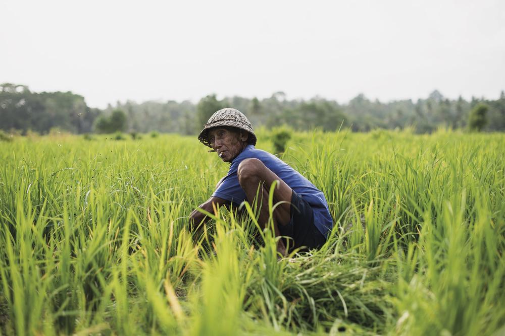 Old rice farmer in Ubud, Bali. © Jens Lennartsson