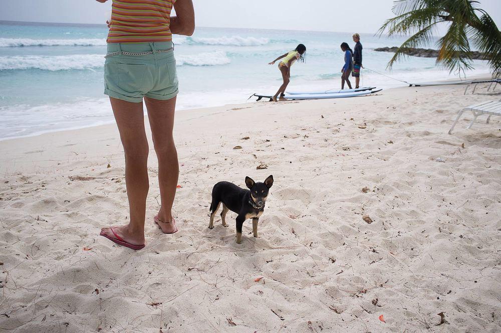 Dog on beach in Barbados @Jens Lennartsson
