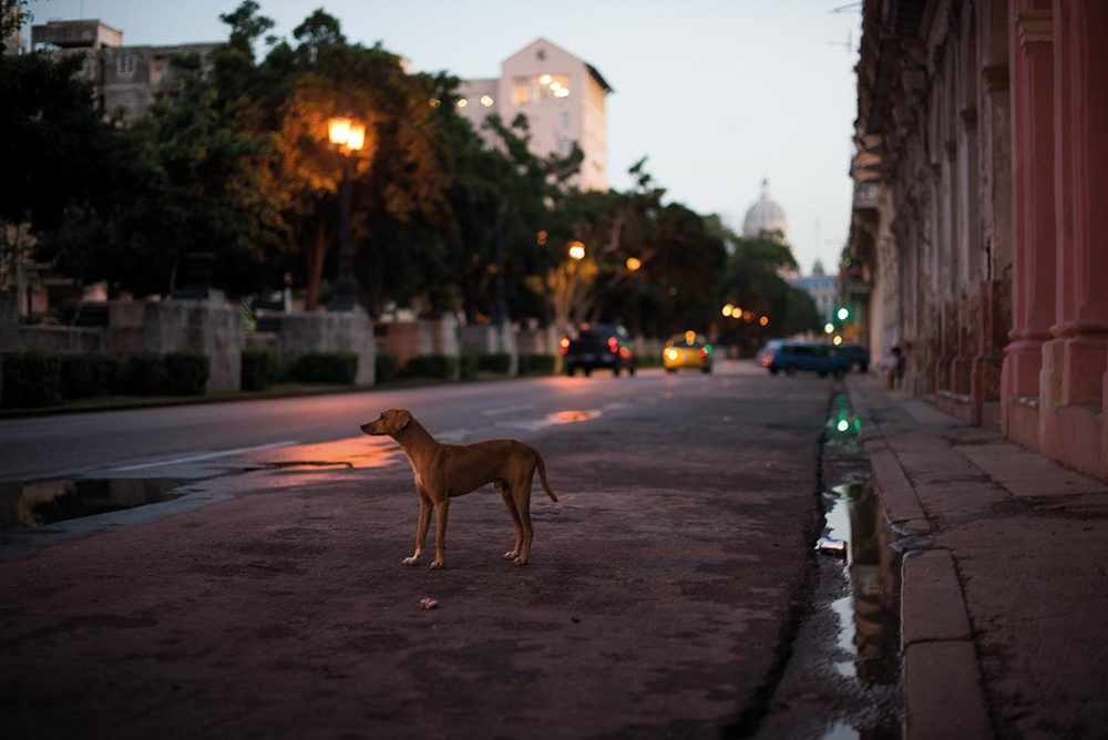 Dog on the streets. Havana, Cuba 2012. ©Jens Lennartsson