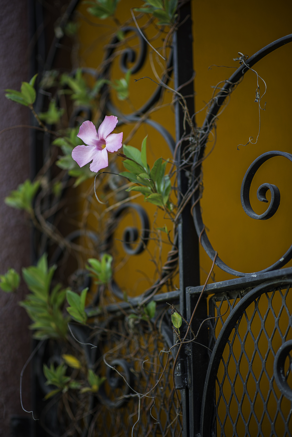 Flowers on Gate, San Francisco