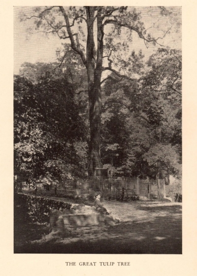 The Great Tulip Tree, circa 1920, from  Inwood Hill Park , Reginald Pelham Bolton