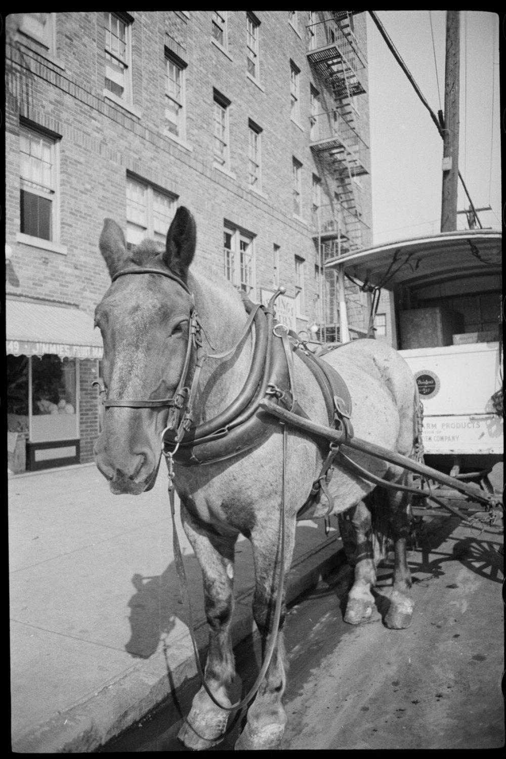 A horse-drawn delivery wagon in the Bronx, ca. 1940.
