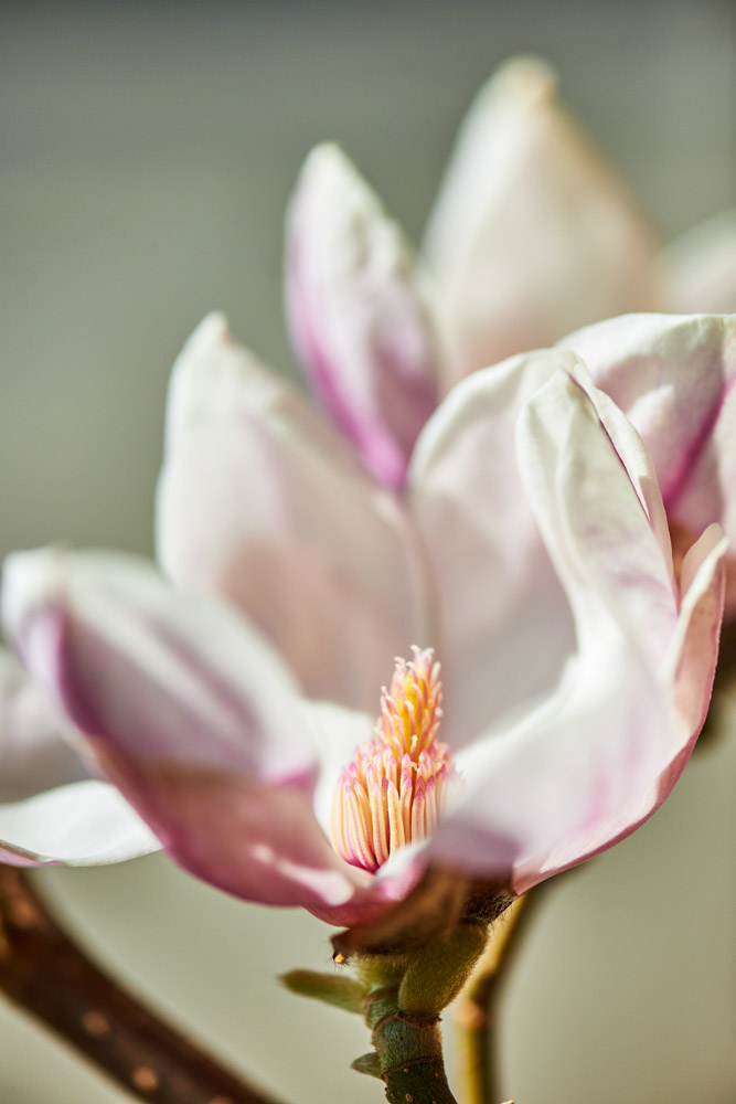 sieben-rosen-fruehling-ostern-2015_DSC8763.jpg