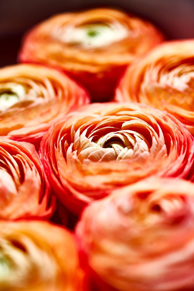 sieben-rosen-fruehling-ostern-2015_DSC8722.jpg