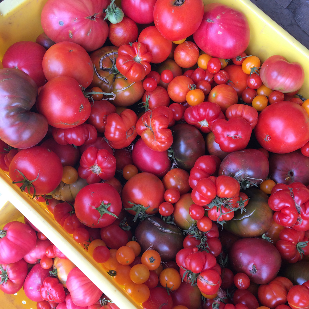 Tomatoes at Norman Hardie. Get on my pizza!