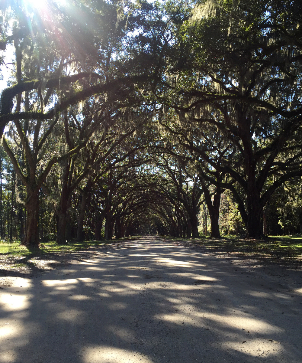 Live oak-lined drive at Wormsloe Plantation.