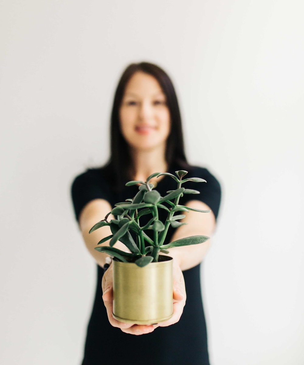 The Best Air Cleansing Plants for Home. By Swell Made Co. Photo by Chantelle Watt Photography.