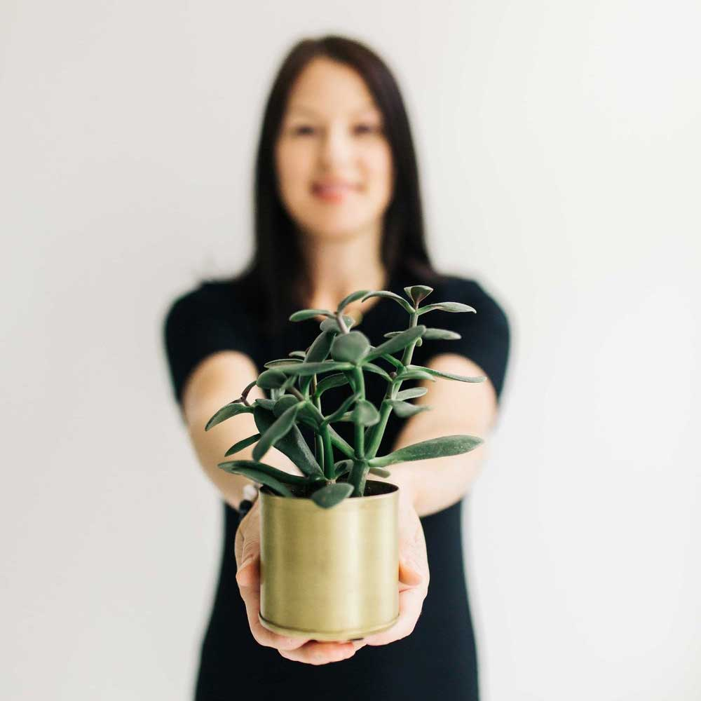 THE BEST AIR CLEANSING PLANTS FOR HOME -