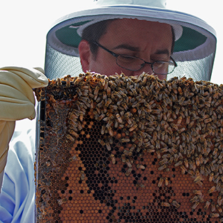 Let's Celebrate the Bees: It's National Pollinator Week