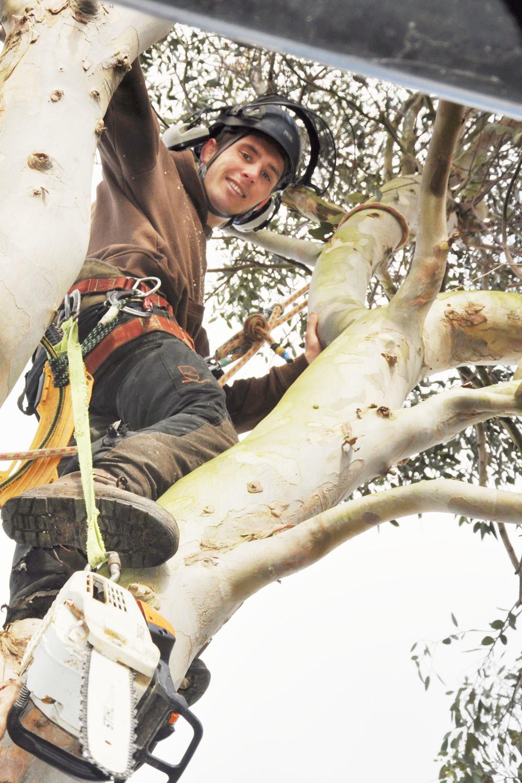 skilled arborist