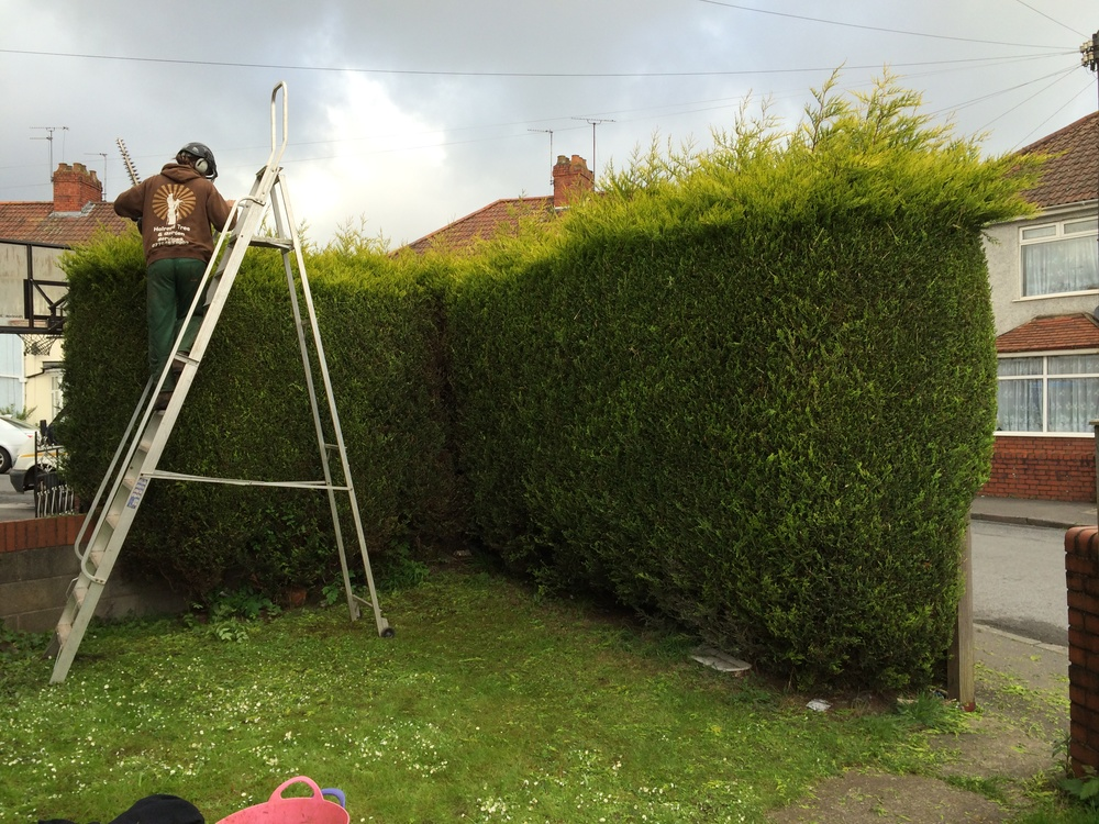 Hedge cutting Bristol