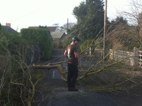 Fallen tree clearing