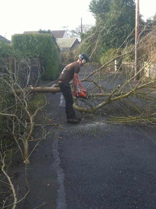 Fallen branch clearing
