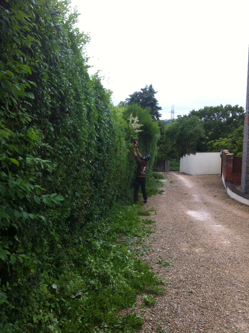 Hedge trimming Bristol