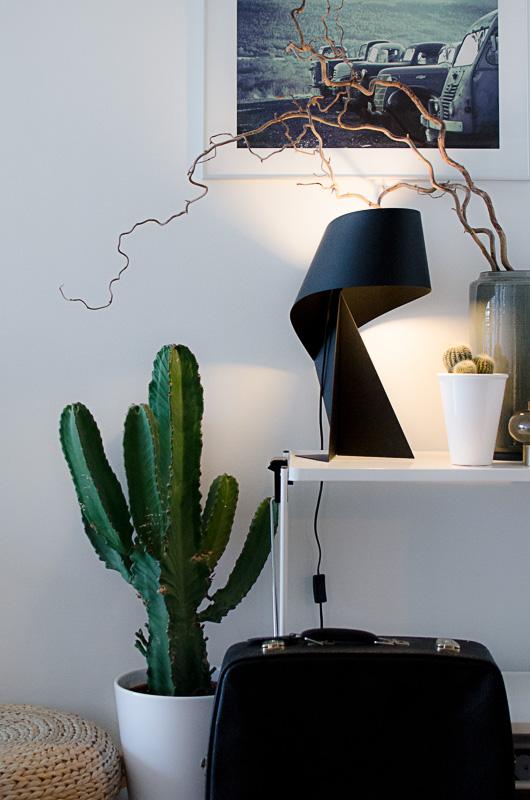 Cactus Love! Disse skulpturelle plantene er noe av det mest takknemlige å omgi seg med av planter.