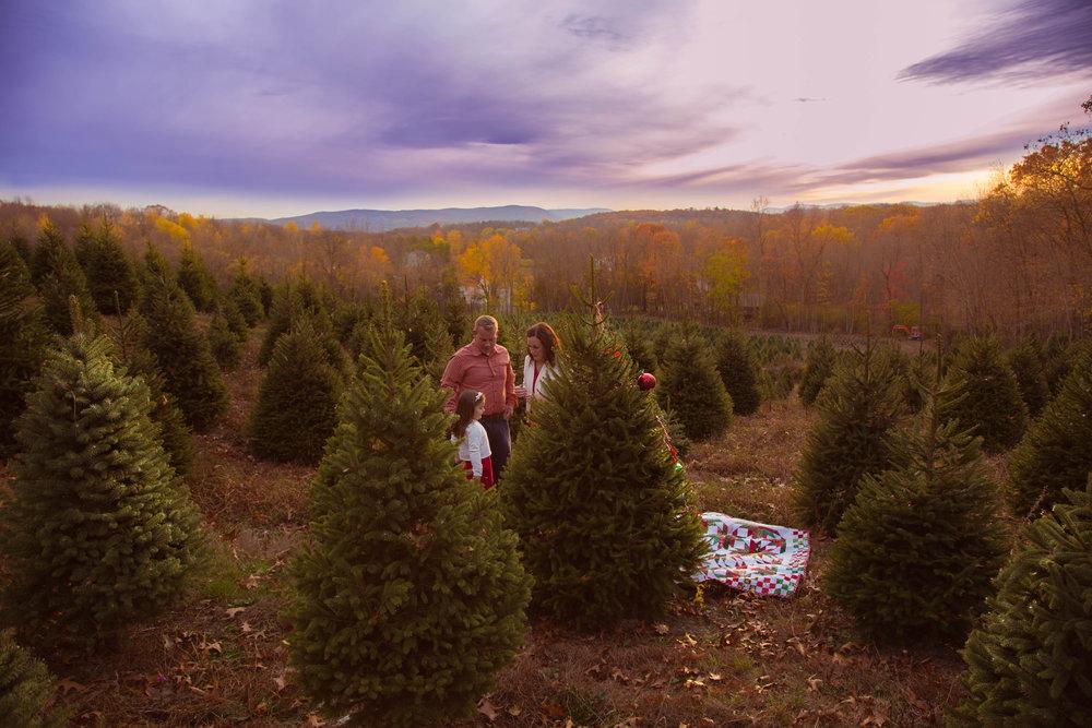 ChristmasTreeFarm-Post-0012.jpg