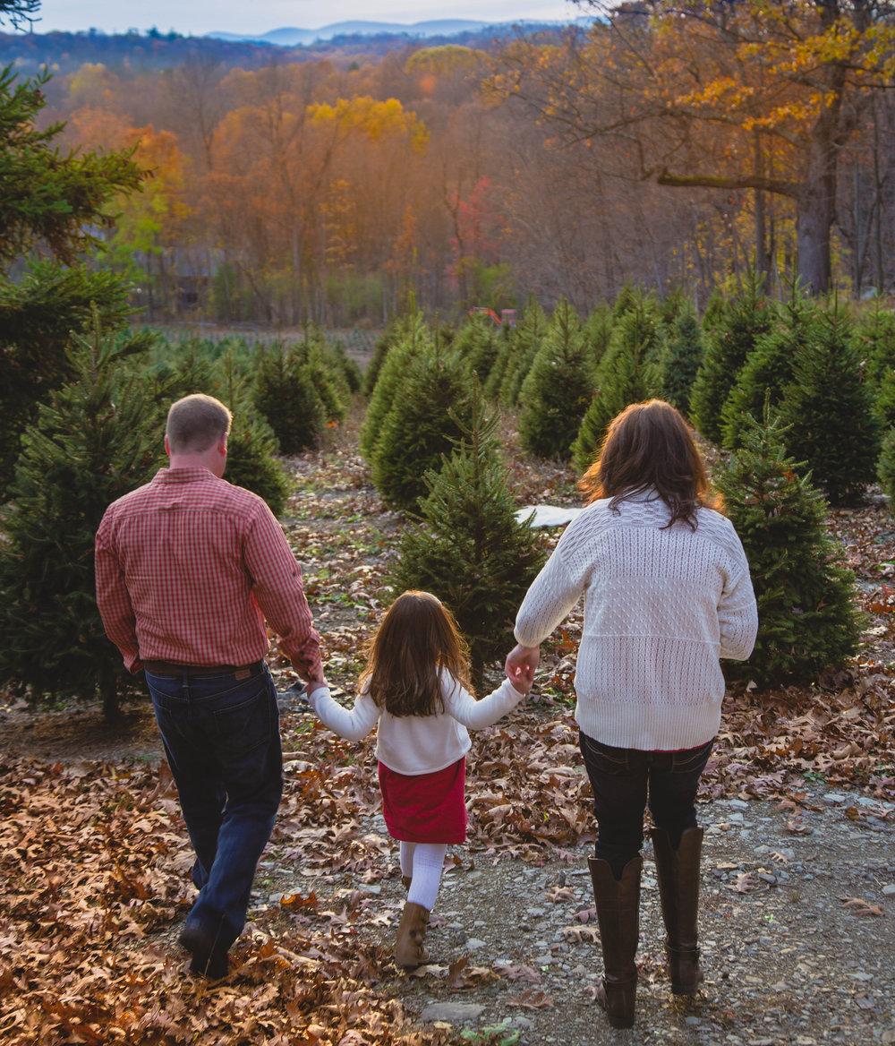 ChristmasTreeFarm-Post-0017.jpg