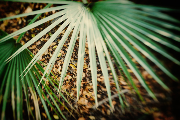 Fronds © Kate Donaldson Photo