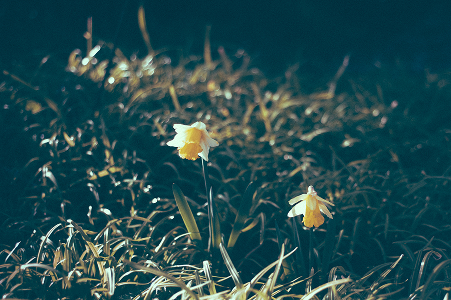 Daffy © Kate Donaldson Photography