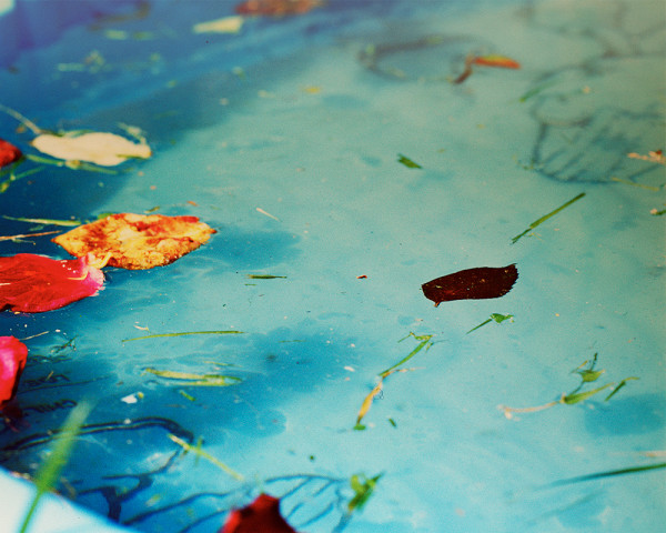 August Pool © Kate Donaldson Photography