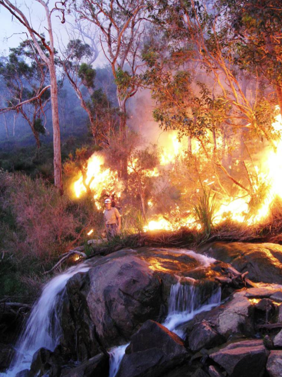 A prescribed fire burns in a eucalyptus-riparian area in Western Australia. Image credit: Western Australia DEC / Rick Sneeuwjagt