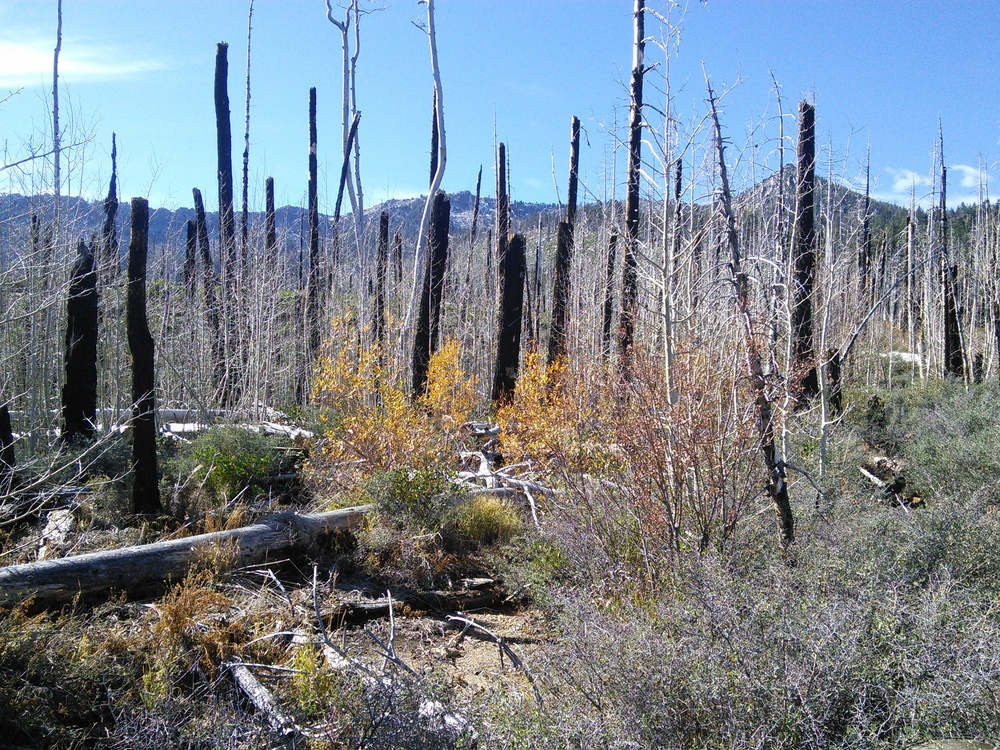 A pile burn in the newly restored Aspen stand.