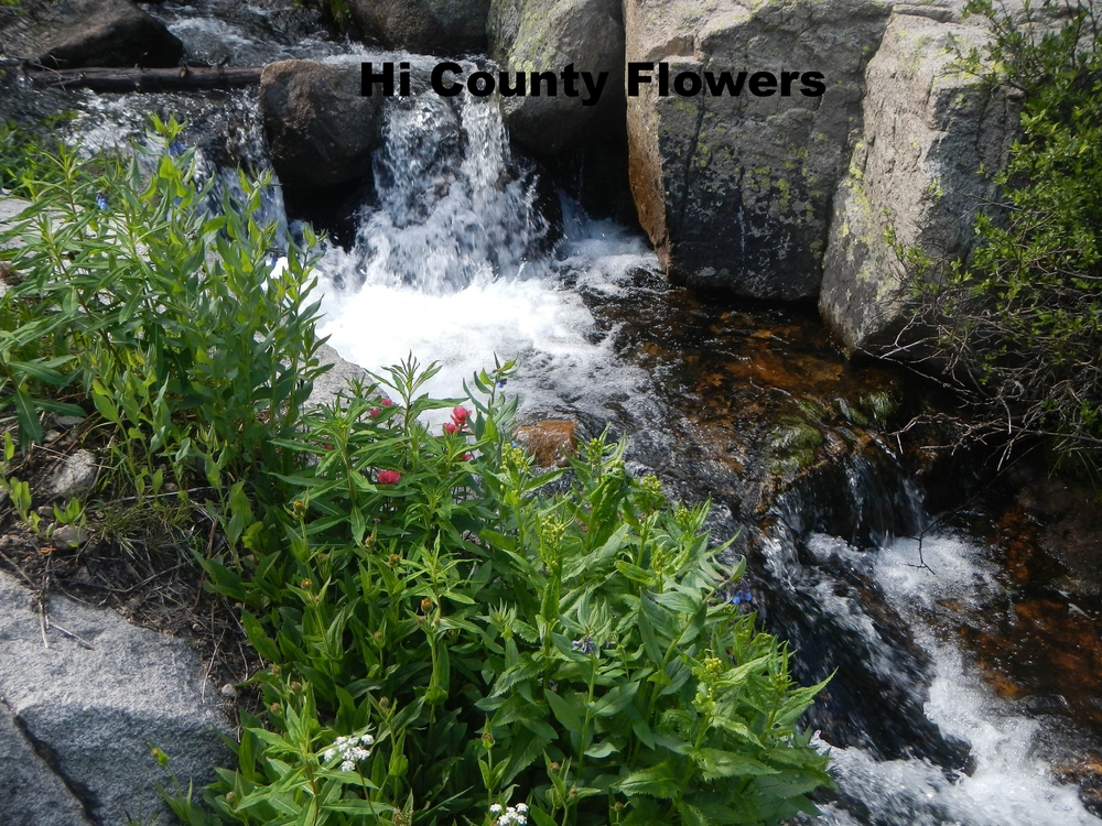 Wildlflowers & Mountain stream