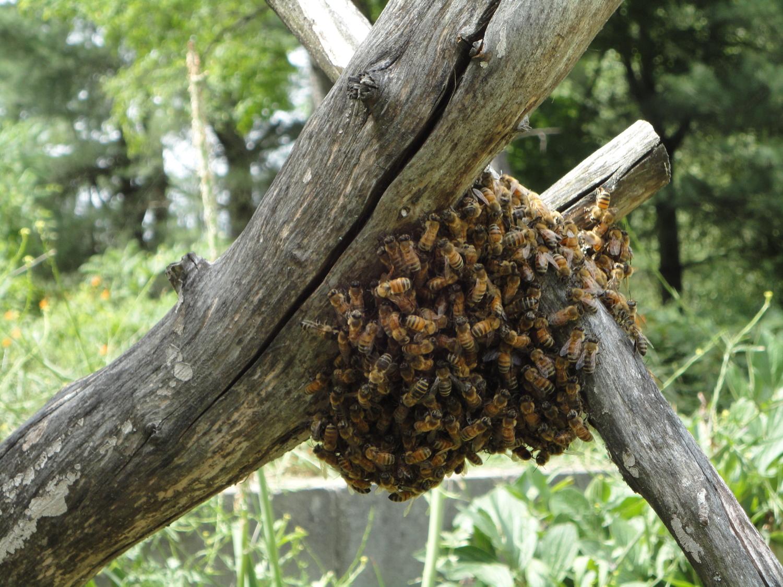 Bee Yard Calendar Catskill Mountain Beekeepers Club Wiring Board Frames
