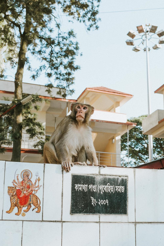 INDI5054.jpg