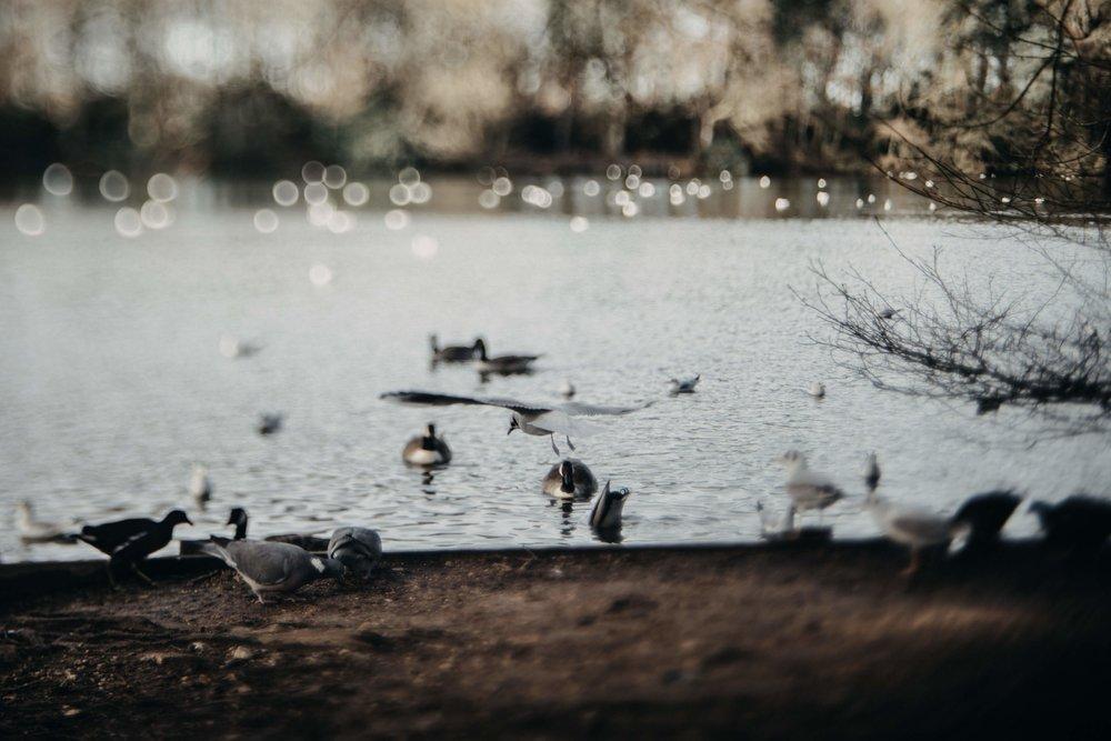 Hartsholme Park photography