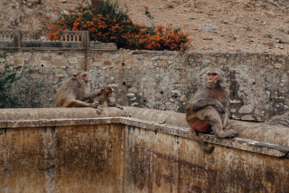 Jaipur travel photography